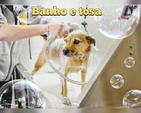 Pet Shop em Planaltina GO
